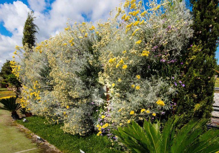 Marinelli System nel vivaio Garden Europa di Jesi
